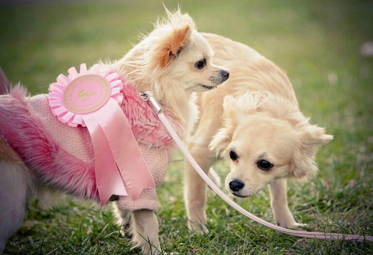 zdjęcie przedstawia dwa psy rasy