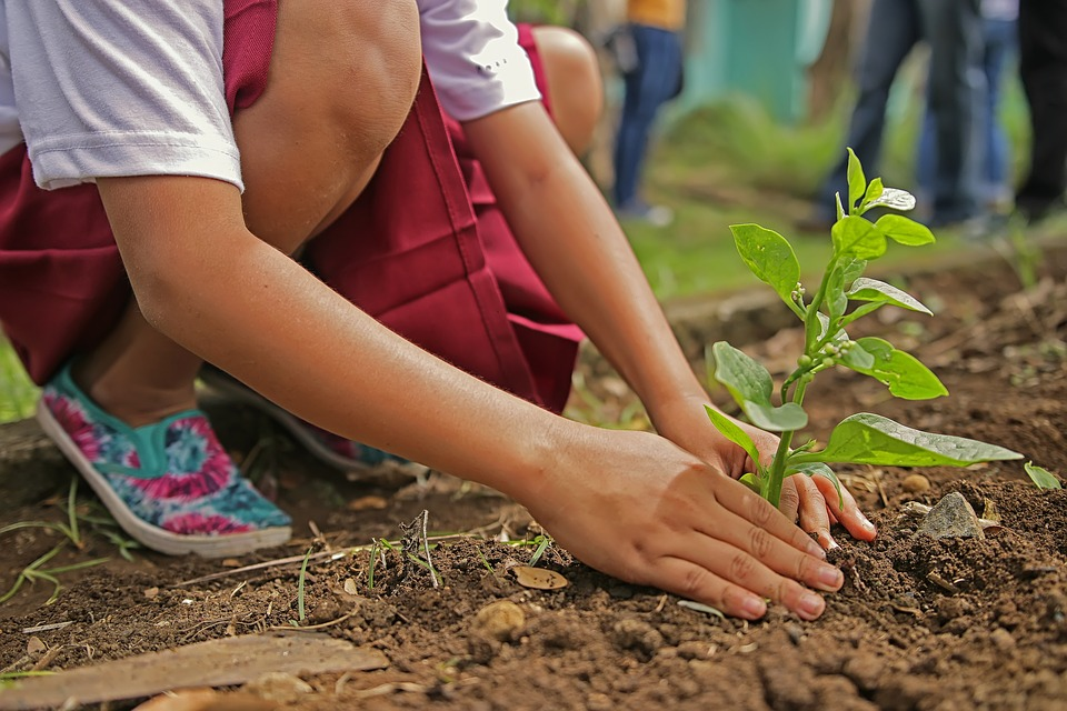 Sadzenie rośliny w ziemi