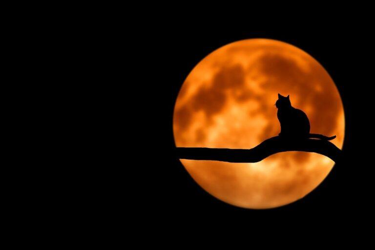 Zdjęcie - noc, na tle wielkiego księżyca na gałęzi siedzi kot