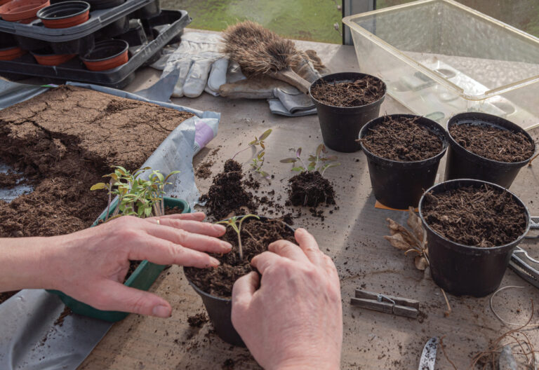 Stół, na stole doniczki z ziemią, rękawice ogrodnice, szczotka, foremka z ziemią. Widzimy dłonie wsadzające roślinkę do doniczki.